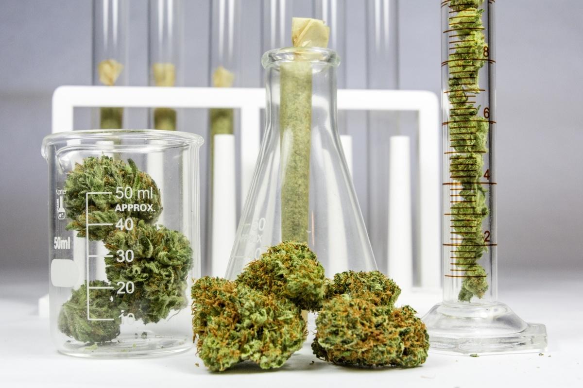 Optimized-Cannabis
